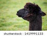 close up head shot of black... | Shutterstock . vector #1419991133