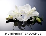 beautiful lily on black... | Shutterstock . vector #142002433