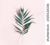 summer composition. tropical...   Shutterstock . vector #1420126106