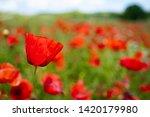 rural poppy field. in a meadow  | Shutterstock . vector #1420179980