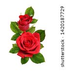 Stock photo red rose flowers in a floral arrangement isolated on white 1420187729