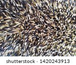 spines hedgehog background... | Shutterstock . vector #1420243913