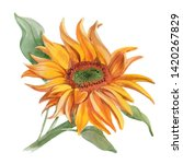 Watercolor Sunflower  Isolated...