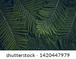 Branches Of Fern Or Palm Trees...