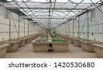 water lily and lotus nursery ... | Shutterstock . vector #1420530680