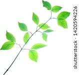 spring twig of dogwood bush...   Shutterstock .eps vector #1420594226