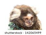 marmoset monkey | Shutterstock . vector #142065499