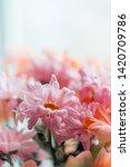beautiful summer flowers.... | Shutterstock . vector #1420709786