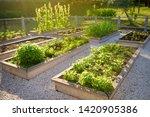 Community Kitchen Garden....