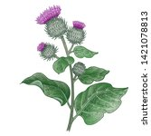 realistic medical plant burdock.... | Shutterstock .eps vector #1421078813