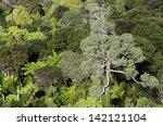 A Giant Kauri Tree In Waitaker...