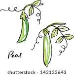 fresh peas growing vector... | Shutterstock .eps vector #142122643