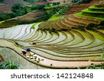 Terraced Rice Field In Water...