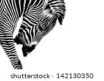 a grevy's zebra  equus grevyi ... | Shutterstock . vector #142130350