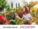 Stock photo young woman gathering flowers in garden girl smelling and admiring roses gardening concept 1421331599