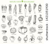 set of hand drawn vegetables ... | Shutterstock .eps vector #1421351930