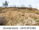 A pile of cracked soil and weeds on a loess slope