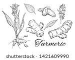 ink turmeric hand drawn set.... | Shutterstock .eps vector #1421609990