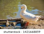 white goose near the water | Shutterstock . vector #1421668859