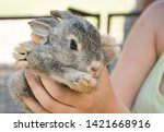 gray rabbit in children's hands | Shutterstock . vector #1421668916