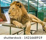 lion king isolated in the aviary | Shutterstock . vector #1421668919