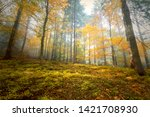 morning sunny colorful autumn... | Shutterstock . vector #1421708930