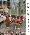 Sassy Brood Of Girls In The Coop-Upper Peninsula, Michigan