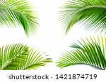 tropical coconut leaf isolated... | Shutterstock . vector #1421874719
