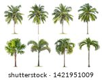 Stock photo coconut and palm trees isolated tree on white background the collection of trees large trees are 1421951009