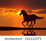 Horse Running During Sunset...
