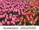Background Image Of Springtime...