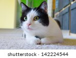 portrait of black and white cat ... | Shutterstock . vector #142224544