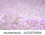 pink flowers of rhododendron...   Shutterstock . vector #1422375056