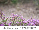 pink flowers of rhododendron...   Shutterstock . vector #1422375059