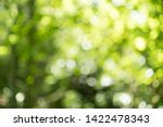 Small photo of Abstract blurred nature background with bokeh for creative designs. Green leaves bokeh out of focus background from nature forest. Green Nature spring and natural light in blur style with copy space.