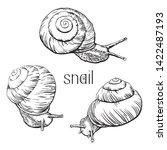 Hand Drawn Snails. Set Black...