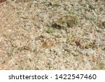 the seabed close up. small... | Shutterstock . vector #1422547460