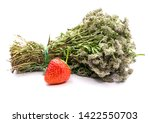dried bouquet of thyme c... | Shutterstock . vector #1422550703