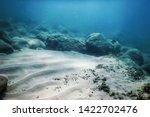 Sea Life Underwater Rocks...