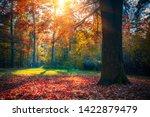 sunny oak tree in the autumn... | Shutterstock . vector #1422879479