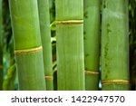 Bamboo  Bambuseae  In The Wood