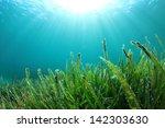 Underwater Sea Grass And Sun