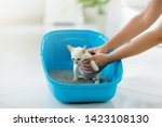 Stock photo cat in litter box white little kitten in toilet with sand filler home pet care and hygiene potty 1423108130
