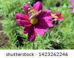 pink flower with butterfly... | Shutterstock . vector #1423262246