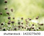 natural abstract soft green... | Shutterstock . vector #1423275650