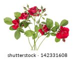 Flowers Of Rambling Rose On A...