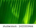 banana green leaf closeup... | Shutterstock . vector #1423333466