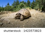 Stock photo mediterranean land tortoise walks tortoises and turtles are both reptiles the defining difference 1423573823
