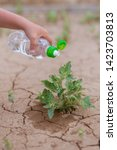 Water The Plant In The Desert....
