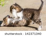 Stock photo little kitten 142371340
